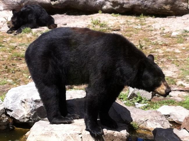 ours-noir